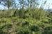 Giant cane grass, glycine, madiera vine, lantana weeds