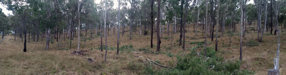Native-forest-thinning-AFTER