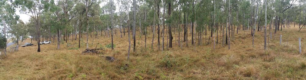 Native-forest-thinning-BEFORE