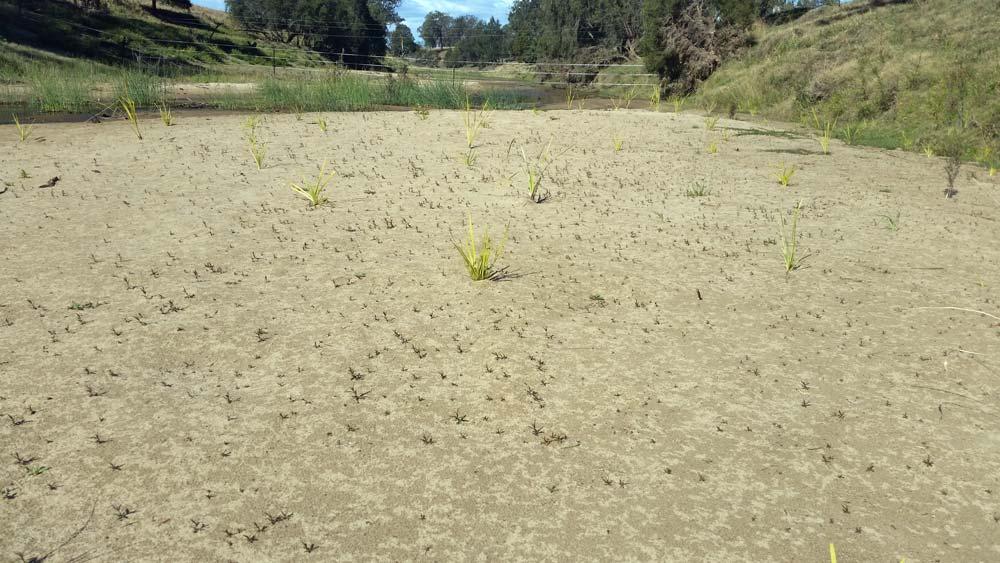 Natural-regeneration-along-creek