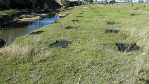 No-herbicide-planting-mats